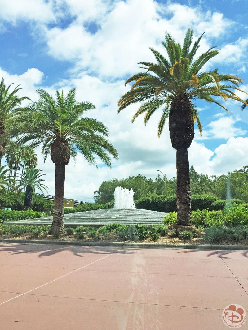 Palm Trees at Hyatt Regency