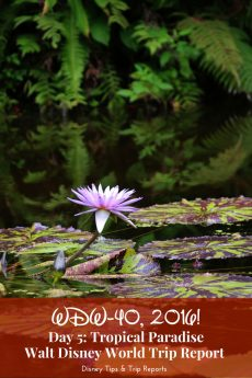 Day 5: Tropical Paradise / WDW-40, 2016. Spend time off resort explore local attractions. Visit McKee Botanical Garden - entrance just $10