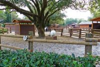 Tri-Circle-D Ranch - Disney's Fort Wilderness Resort & Campgrounds