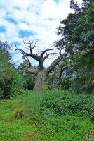 Kilimanjaro Safaris - Disney's Animal Kingdom