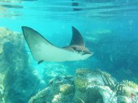 Day 22: Underwater World » Discovery Cove