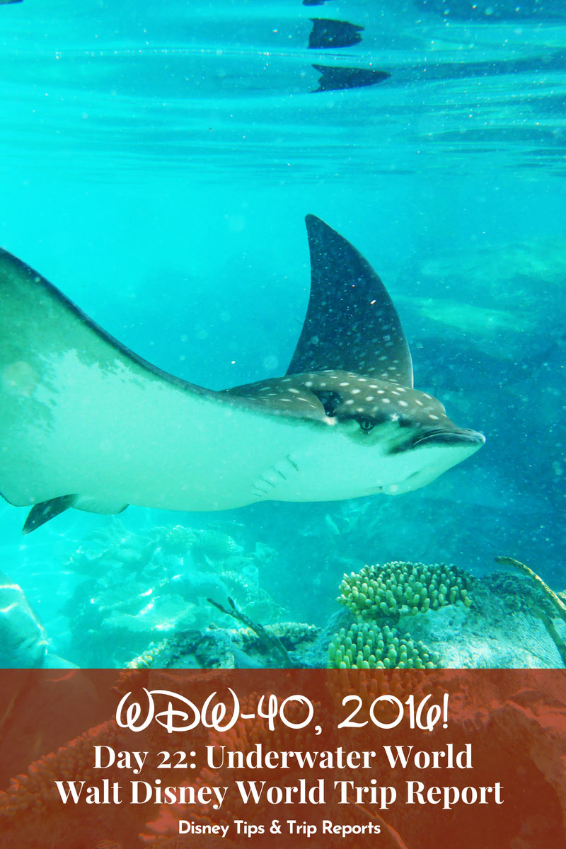 A day at Discovery Cove in Orlando Florida. Discovery Cove is an all-inclusive day resort where you can swim with dolphins, rays, and hundreds of reef fish. Plus see tropical birds and other wildlife at this serene oasis in Orlando.